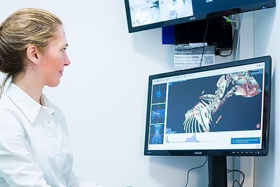 Tierarzt Besserer: Bildgebende Diagnostik - CT-Monitor